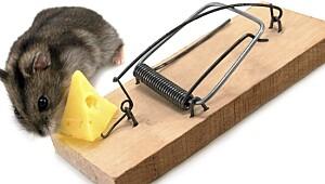 Slik fanger du musene