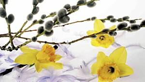 Varsler ny pollentype