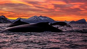 Norgesmester i Naturfoto 2013